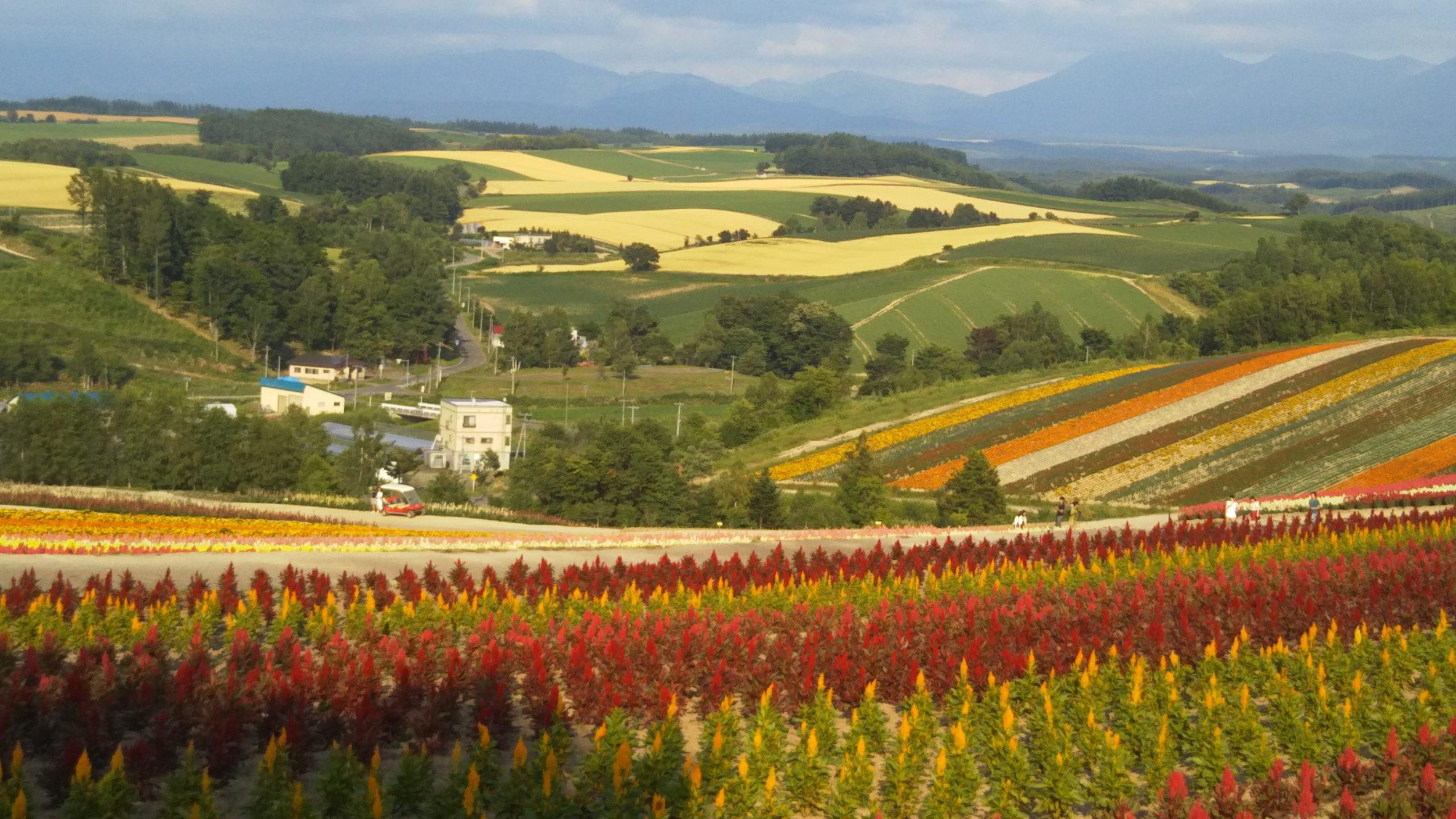 一日散歩きっぷで行ける美瑛「四季彩の丘」の写真
