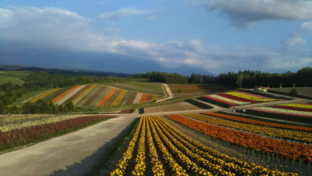 美瑛「四季彩の丘」の写真